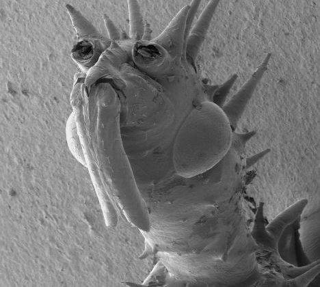 Microscopic Acari Alien Archon