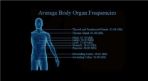 Human Body Organ Frequencies