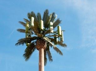 palmtreecelltower