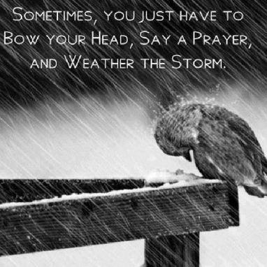 WeatherTheStormBirdMEME