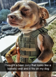 BeerCozyBallisticVestOnDogCUTE