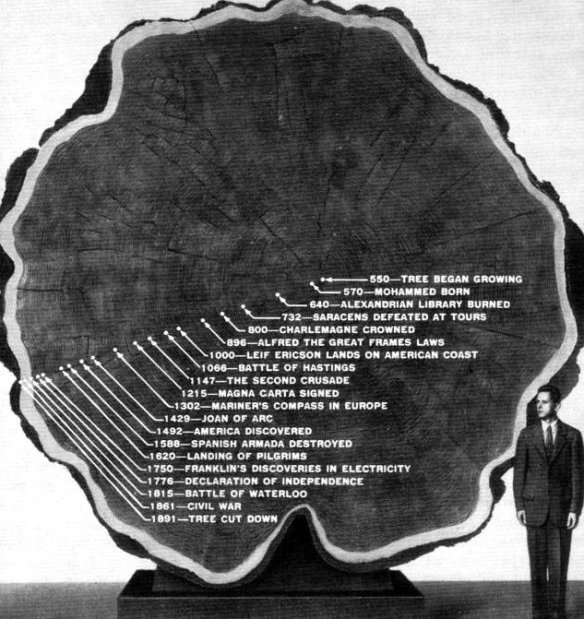 TreeRingsRecordWitnessOfHistory