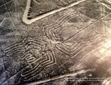 MayanSpiderNAZCAbook2