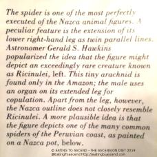 MayanSpiderNAZCAbook4